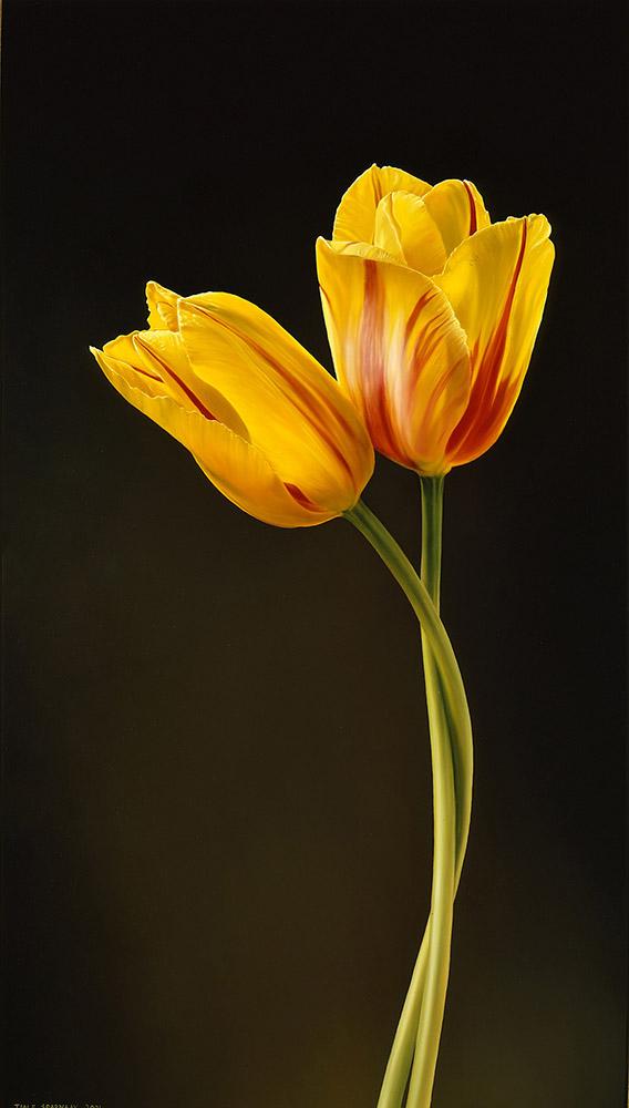 Twee Tulpen Tjalf Sparnaay